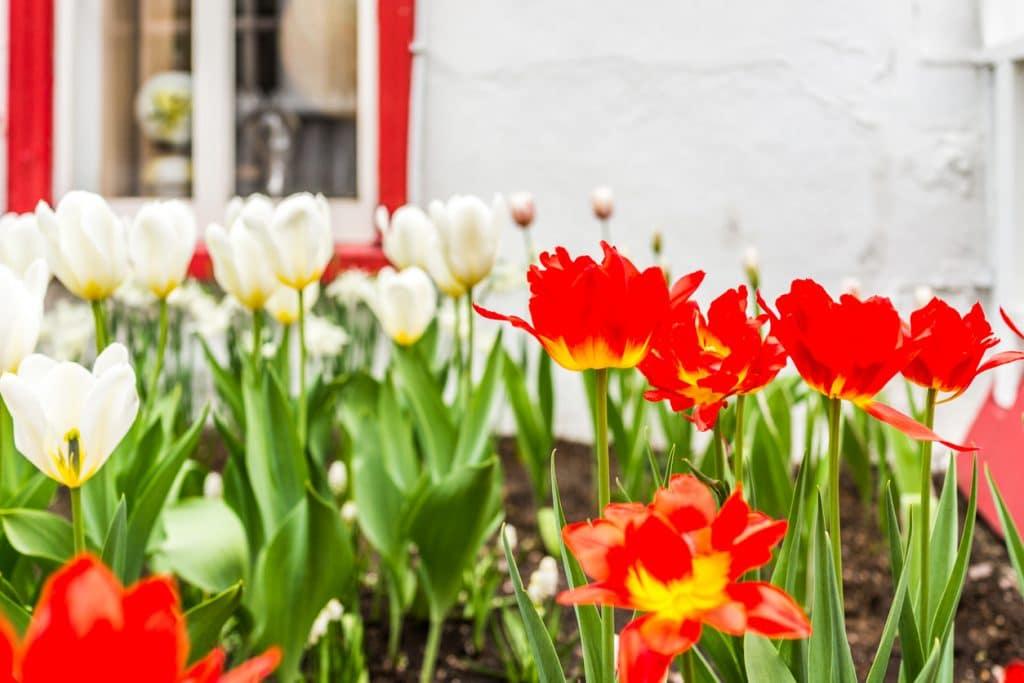 Springtime Open House