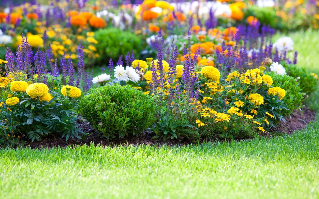 6 Things to Plant in April To Enhance Your Property's Value